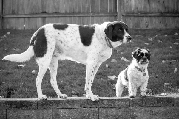 Photograph - Brothers Bw by Kristia Adams