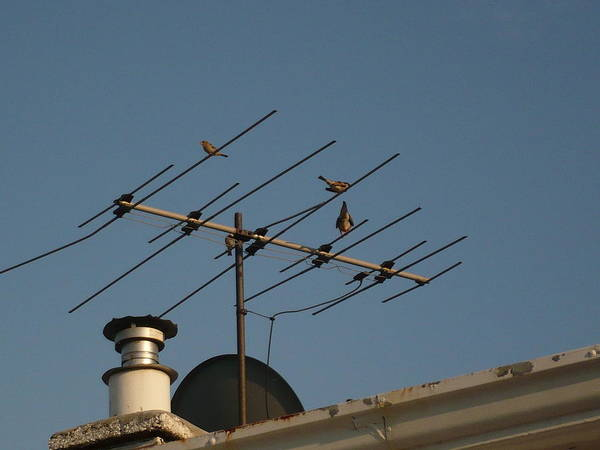 Chirping Antenna Art Print by Stephen Davis