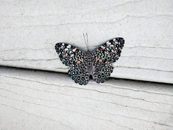 Wall Art - Photograph - Chloe's Cracker Butterfly by Marilyn Hunt