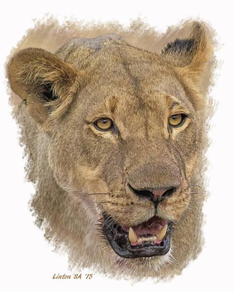 Digital Art - Chobe Lioness 2 by Larry Linton