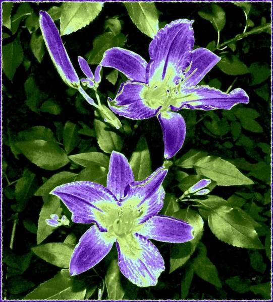 Wall Art - Digital Art - Choice Purple Lilies by Will Borden