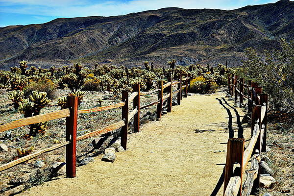 Photograph - Cholla Cactus Garden Pathway - Joshua Tree National Park by Glenn McCarthy