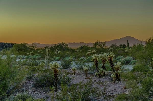Photograph - Cholla Desert Sunset by Gaelyn Olmsted