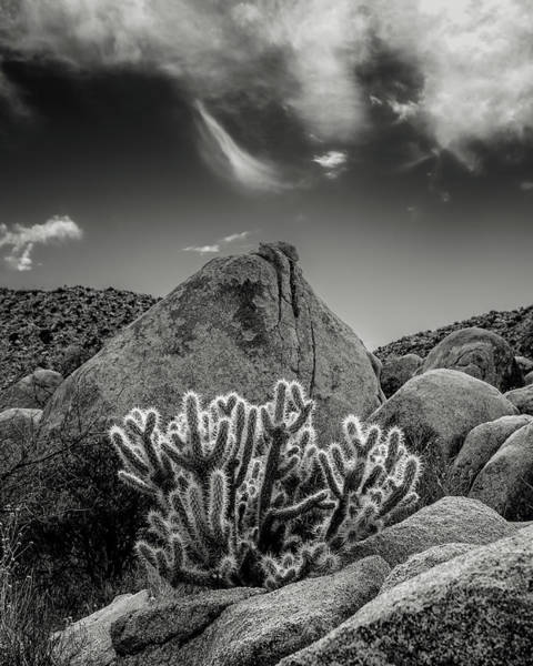 Wall Art - Photograph - Cholla by Joseph Smith
