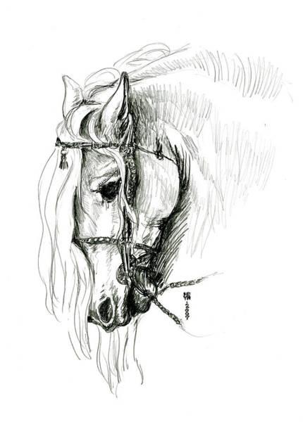 Friesian Drawing - Chomping At Bit - Sketch1 by Shirley Heyn