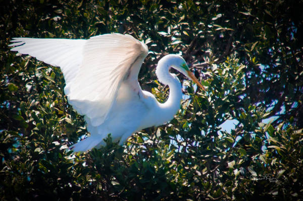 Photograph - Choosing A Nesting Spot by Susan Molnar