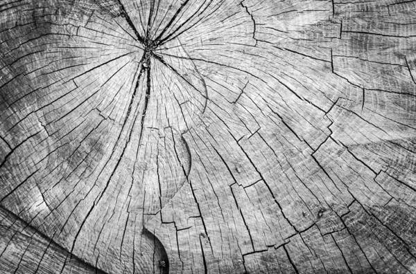 Photograph - Chopped Wooden Tree Trunk by John Williams