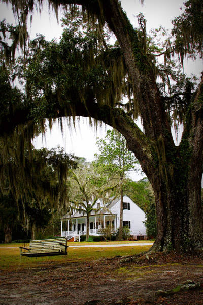 Alligator Alley Photograph - Chotin Plantation - Louisiana Collection by Angie Covey