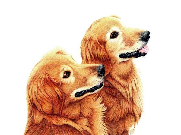 Golden Retriever Drawing - Chris And Riggs by Danielle R T Haney