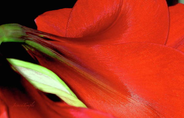 Wall Art - Photograph - For The Love Of Red by James Temple