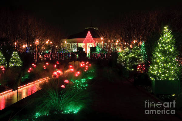 Photograph - Christmas At Daniel Stowe Gardens by Jill Lang