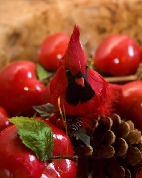 Photograph - Christmas Cardinal by Ginger Wakem