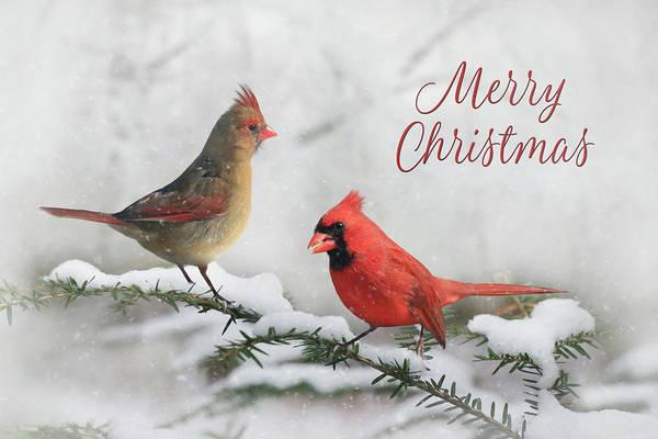 Female Cardinal Photograph - Christmas Cardinals by Lori Deiter