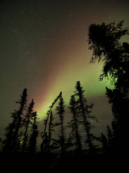 Photograph - Christmas Colors Aurora by Ian Johnson
