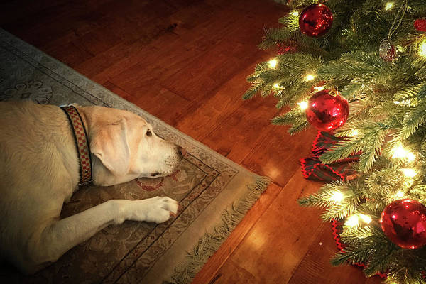 Photograph - Christmas Dreams by Allin Sorenson