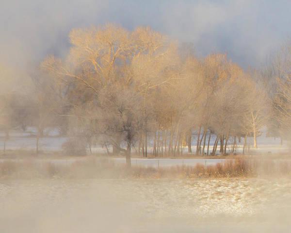 2017 Photograph - Christmas Eve Fog  by Bridget Calip