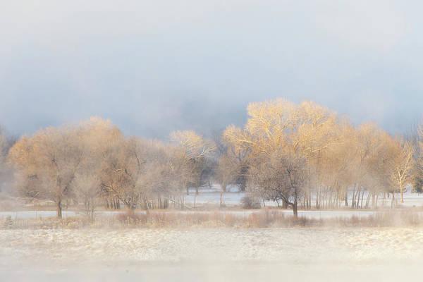 Allure Wall Art - Photograph - Christmas Eve Foggy Trees by Bridget Calip