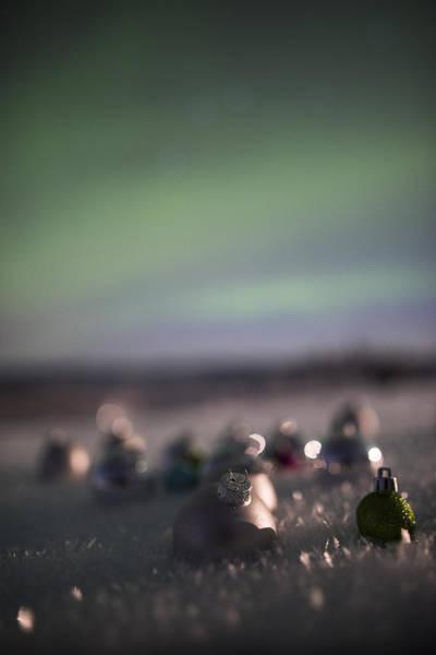 Photograph - Christmas Green by Ian Johnson