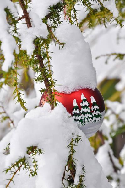 Wall Art - Photograph - Christmas Greetings 2 by Stanislovas Kairys
