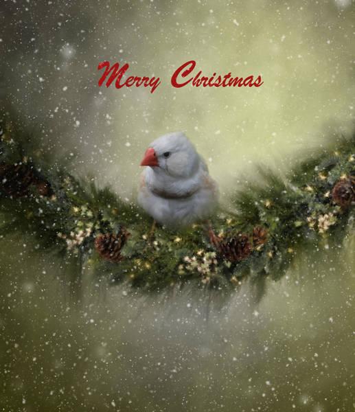 Finch Photograph - Christmas Greetings by Kim Hojnacki