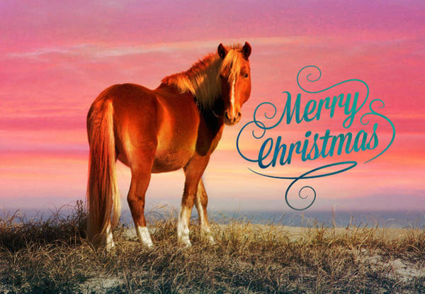 Photograph - Christmas Horse Sunset by Alice Gipson