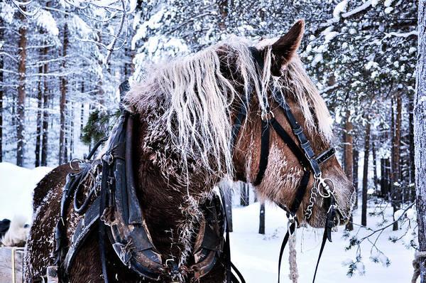 Christmass Photograph - Christmas Horse by Tamara Sushko