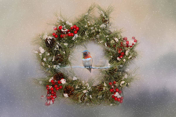 Photograph - Christmas Hummer by Lynn Bauer