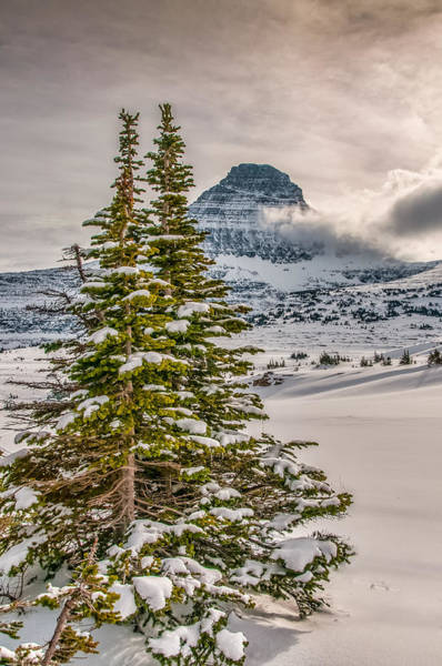 Photograph - Christmas In Glacier National Park by Brenda Jacobs