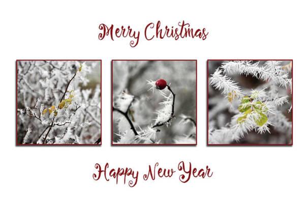Photograph - Christmas Needles by Randi Grace Nilsberg