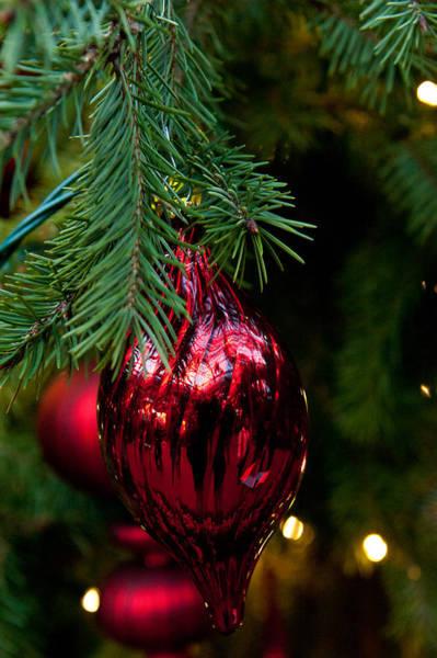 Photograph - Christmas Ornament by Louis Dallara