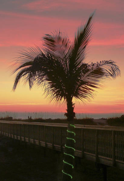 Photograph - Christmas Palm by Steven Sparks