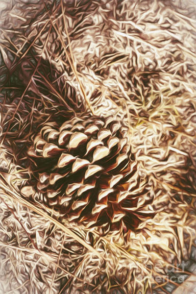 Pine Cones Painting - Christmas Pinecone On Barn Floor by Jorgo Photography - Wall Art Gallery