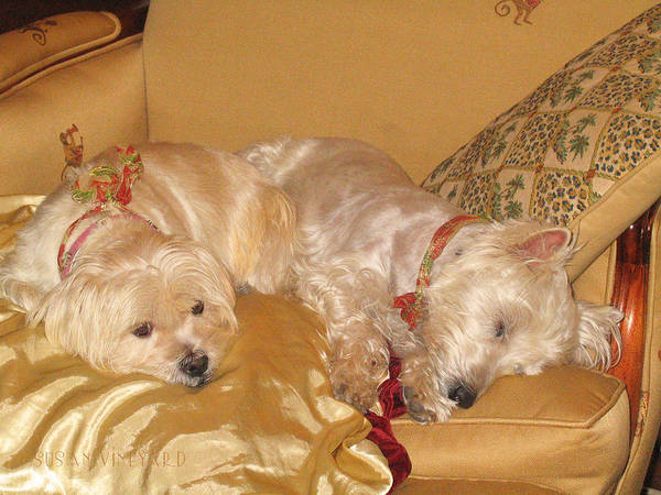Photograph - Christmas Pups Dream Of Sugarplums by Susan Vineyard