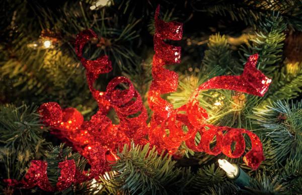 Photograph - Christmas Red by Allin Sorenson