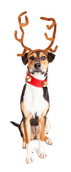 Canine Photograph - Christmas Reindeer Dog Tall Banner by Susan Schmitz