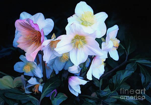 Photograph - Christmas Rose by Jutta Maria Pusl