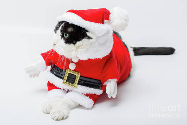 Photograph - Christmas Santa Cat by Benny Marty