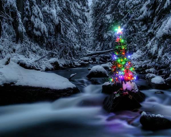 Forest Spirit Wall Art - Photograph - Christmas Spirit In Granite Creek by Robert Hosea