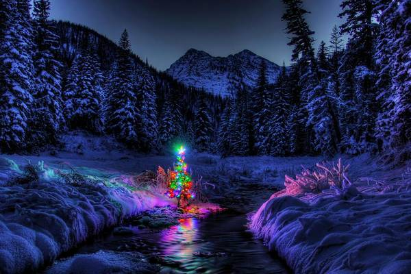 Christmas Tree Photograph - Christmas Spirit In Snowshoe Creek by Robert Hosea