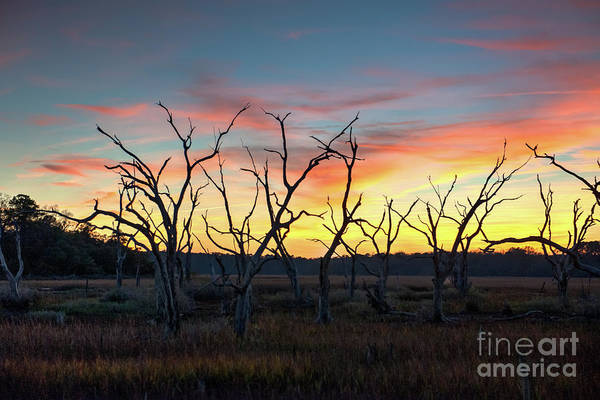 Photograph - Christmas Sunset by Dale Powell