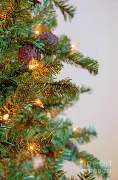 Photograph - Christmas Time 3 by Andrea Anderegg