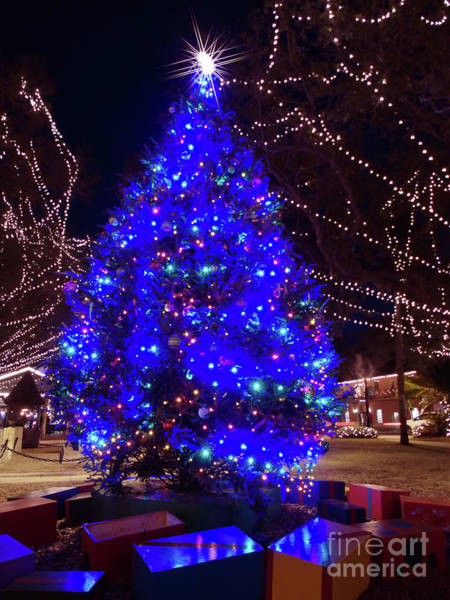 Lightner Museum Photograph - Christmas Tree Downtown St Augustine by D Hackett