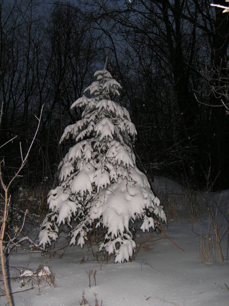 Photograph - Christmas Tree Snow by Randy J Heath