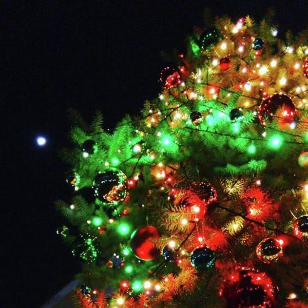 Strong Wall Art - Photograph - Christmas Tree With Moon by Nori Strong