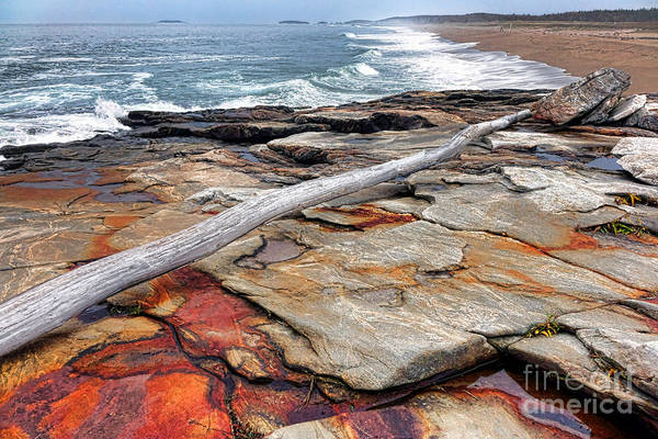 Wall Art - Photograph - Chroma Reid State Park by Olivier Le Queinec