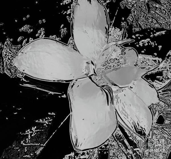 Photograph - Chrome Magnolia by D Hackett