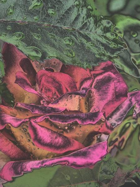 Digital Art - Chrome Rose 64182 by Brian Gryphon