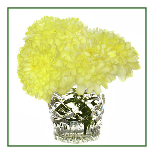 Wall Art - Photograph - Chrysanthemums In Crystal by Terence Davis