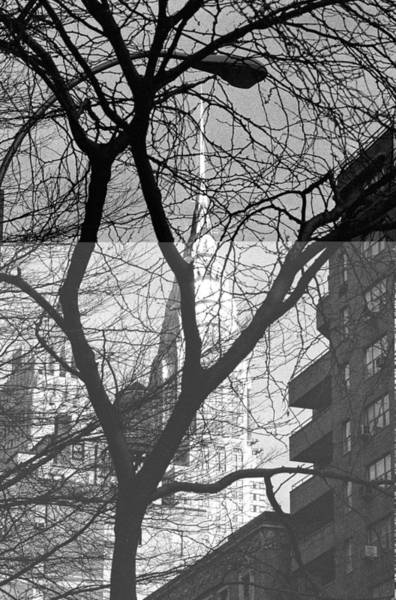 Photograph - Chrysler Building And Tree by Dave Beckerman