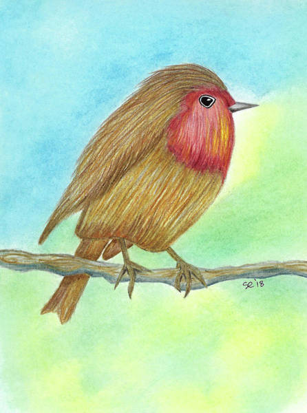 Drawing - Chubby Bird by Susan Campbell